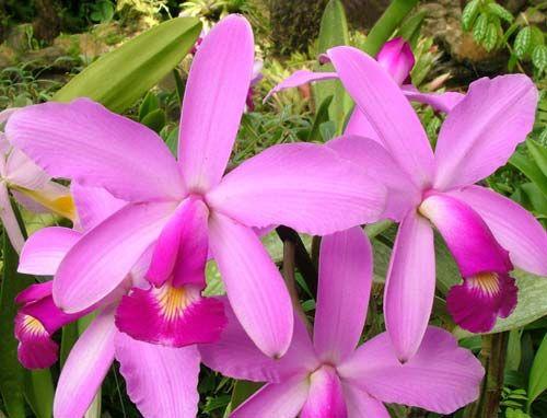 junho « 2015 « Orquídeas Fascinantes