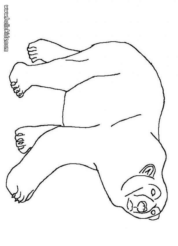 polar bear coloring page winter pinterest polar bear