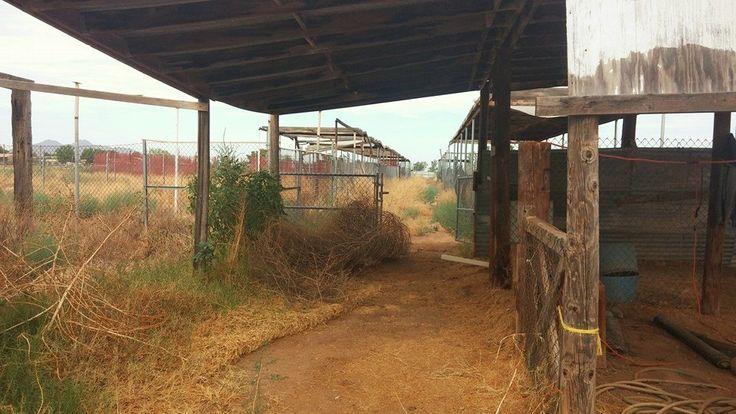 Pasture - Desolate Homestead