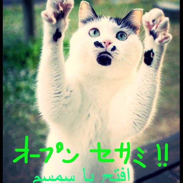 開けーゴマ!  #pet#cats#neko#ilovecat#にゃんこ#ネコラ部#モフモフ#保護猫#愛猫#love#lovely#cute#funny#meow#instacat#変顔#顔芸#kawaii#白黒猫#鍵しっぽ#sippo#猫写真#OpenSesame#開けゴマ#