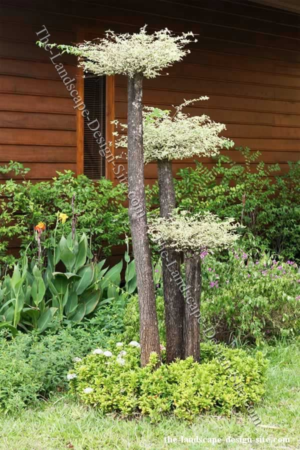 Like The Tree Trunk Bouquet At Black Dan Lake (short, Thick Tree Trunk With A Flower Of Drift