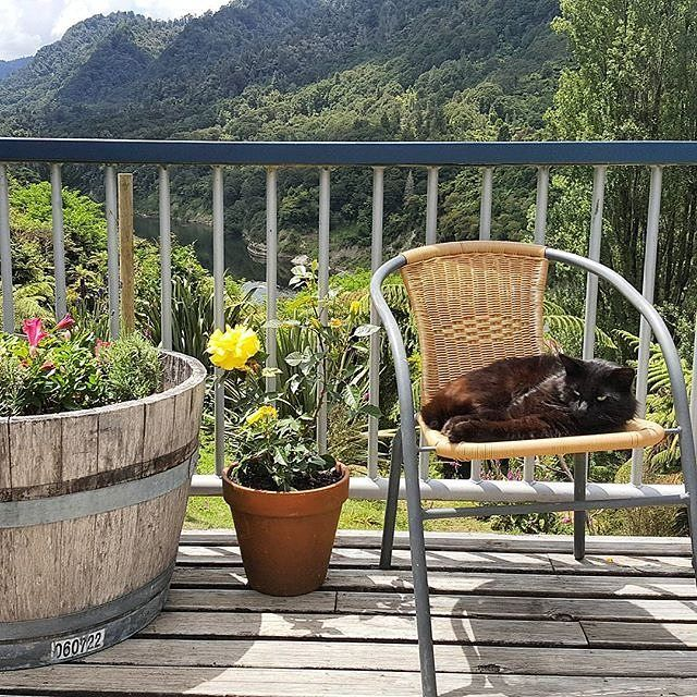 We think this cat knows how to really relax! There are some great accommodation options in the Whanganui Region like the Bridge to Nowhere Lodge and Tours. #visitwhanganui Pic Credit: @bridgetonowherelodge   http://ift.tt/2i4WnZg . . . . #whanganui #newzealand #wanganui #northisland #westcoast #travelnz #visitnewzealand #newzealandbeauty #whanganuiriver #nzmustdo #kiwi_photos #kiwipics #travelgram #lonelyplanet #nz #mustdonz #travel #igtravel #instatravel #cat #catsofinstagram #relaxing