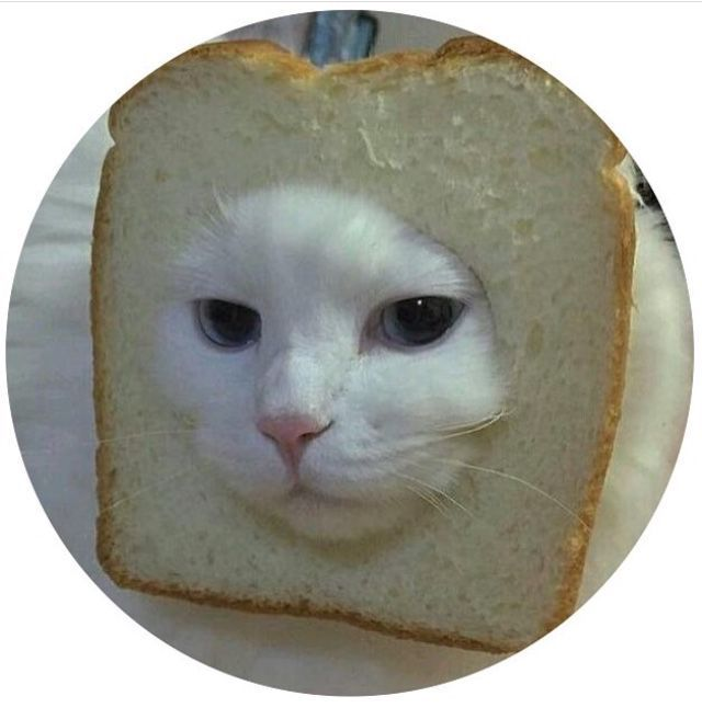 Fondos/iconos - Iconos de gatos graciosos🐱   Fotos de