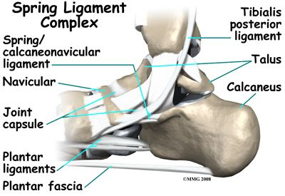 Spring ligament | ATC | Pinterest | Podiatry, Physical therapy and ...