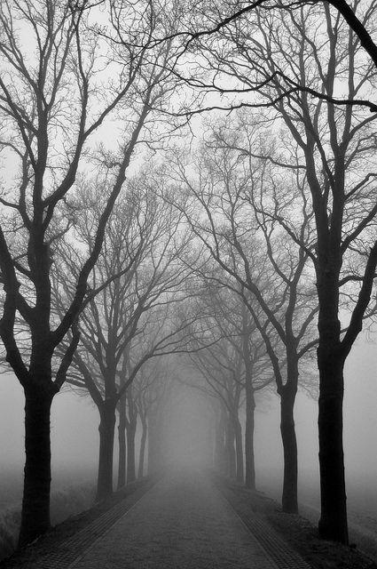 foggy morning path.