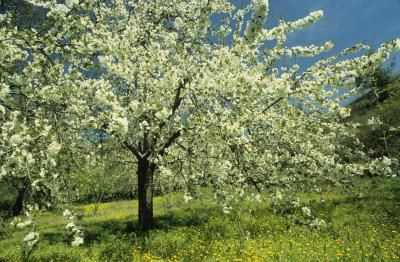 It's always a shock to realize that your present is the future you used to read about in science fiction. In yesteryear, you grew an apple tree