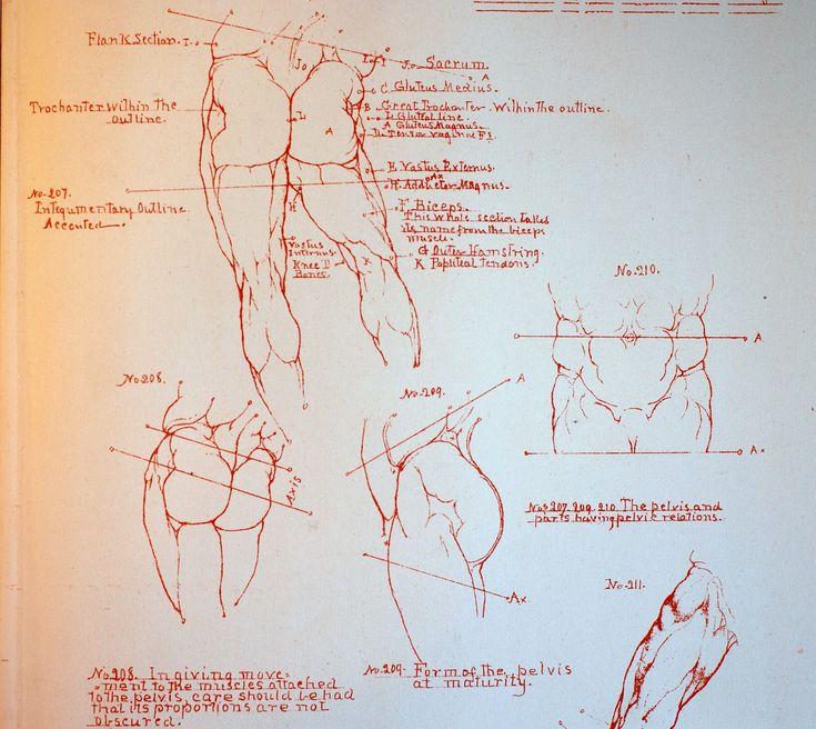 Artist anatomy reference