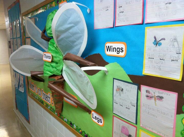 17 best images about minibeasts on pinterest activities for Bug themed bedroom ideas