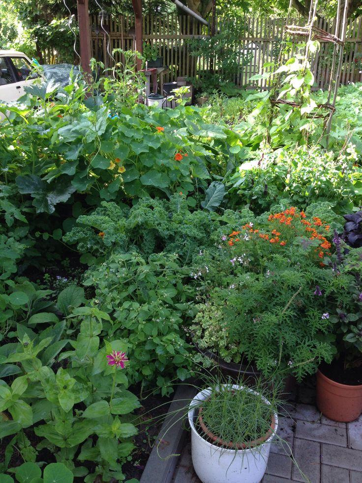 62 best Balkonpflanzen Nordseite images on Pinterest Balcony - vorgarten anlegen nordseite