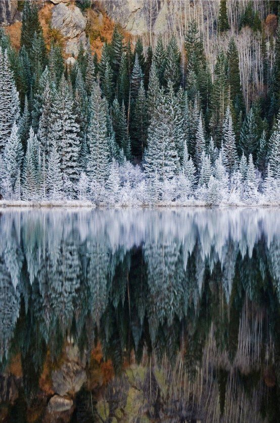This photo of pine trees on the edge of a lake is just so pretty. The trees all look barely touched by Jack Frost, their limbs still Christmas green, but now with just that light touch of powder snow. It's sights like this that let you know winter is on its way.