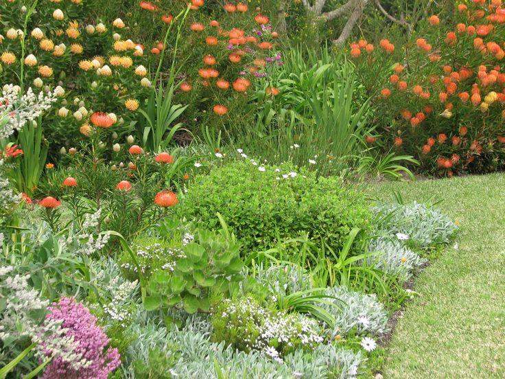 Fynbos Gardens Hermanus: Fynbos is rewarding! Spring 2013.