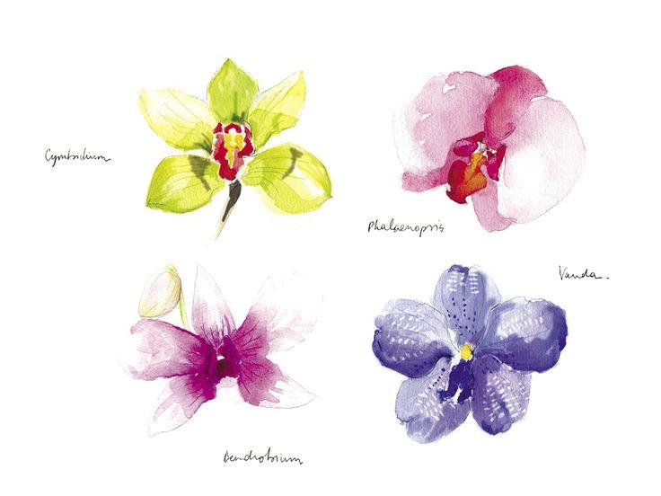 illustration aquarelle orchidées - Pauline.t