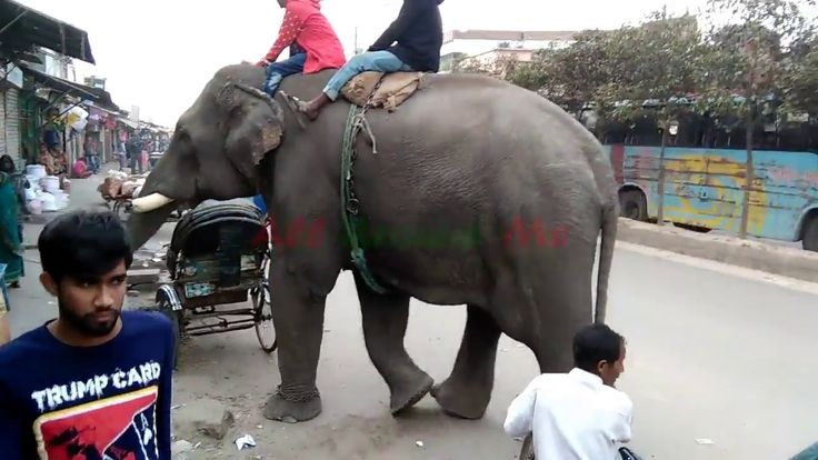 Terrorist elephant collecting money || Extortion by elephant || Money co...