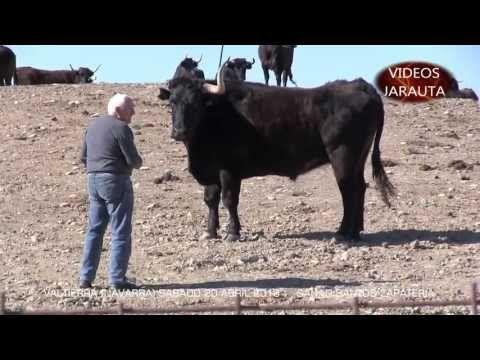DÍA DE CONVIVENCIA TAURINA CON VISITA A LA GANAD. DE SANTOS ZAPATERIA,  VALTIERRA. Navarra (SABADO 20 ABRIL 2013) - YouTube