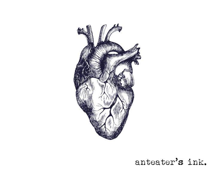 9 Best Heart Anatomy Images On Pinterest Heart Anatomy Human