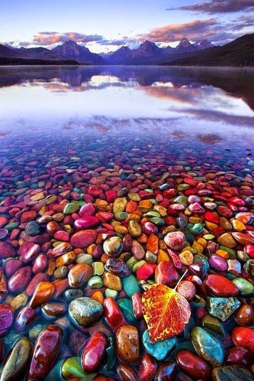 """These rocks are actually all around Glacier National Park, and were formed at different eras. When the glaciers came, it broke down the rocks into tiny fragments and the rivers washed them away. Many of these got deposited onto the lakes and """"tarns"""" - lakes formed by filling the bottoms of ice-scoured amphitheaters. Water erosion then rendered them into smooth pebbles."""