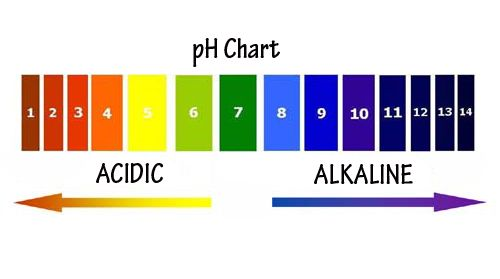 How Your pH Determines Your Overall State of Health Only through personal experience or self-education will you be able to discover all-encompassing health truths such as the inevitable connection between the quality of our air, water, food and our overall state of health. This is something that …