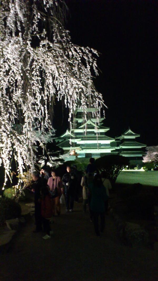 Typical Sidare Sakura  埋め込み画像への固定リンク