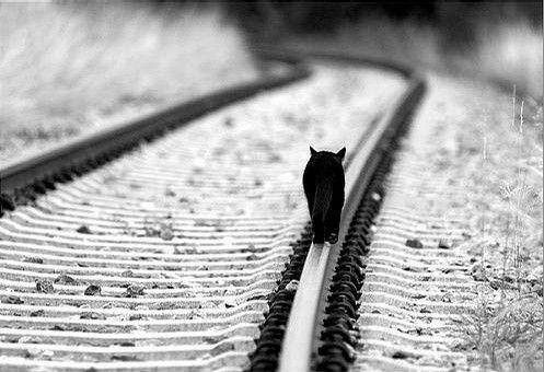 Sie sagen, dass schwarze Katzen Pech haben, sie sagen, dass Sie getötet werden, wenn Sie auf Bahngleisen gehen. Lassen Sie uns die beiden zusammenfügen.