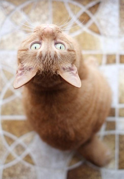 irecallthepushmorethanthefall: Domestic cat by Akimasa Harada on Getty Images