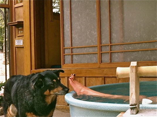 A Pet Friendly Spa In New Mexico