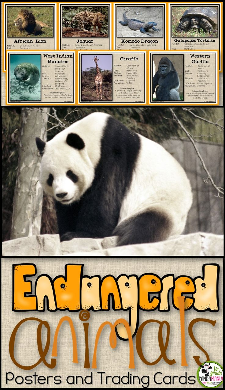 36 Endangered Animals Information Posters and 36 matching Trading Cards with Suggestions for use are included. Great for 1st grade and 2nd grade Earth Day activities, Endangered Animal Units, April Activities or any day!