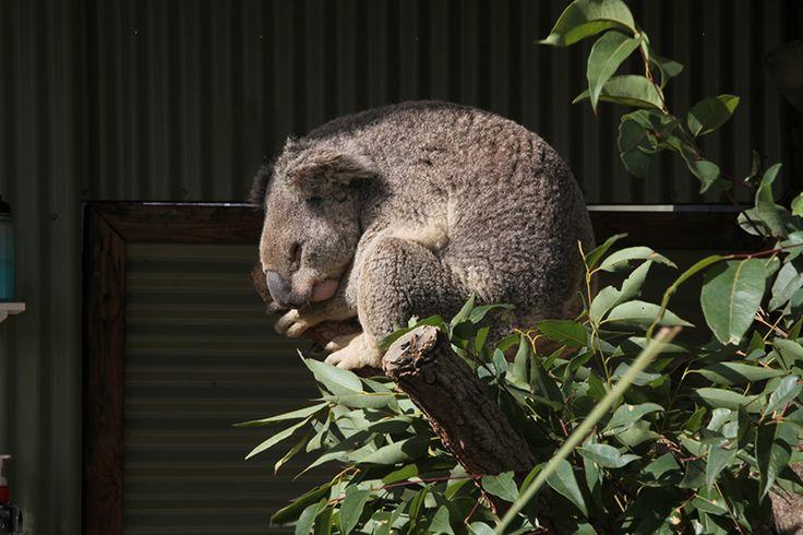 5 skønne seværdigheder i Australien med Merlin Annual Pass
