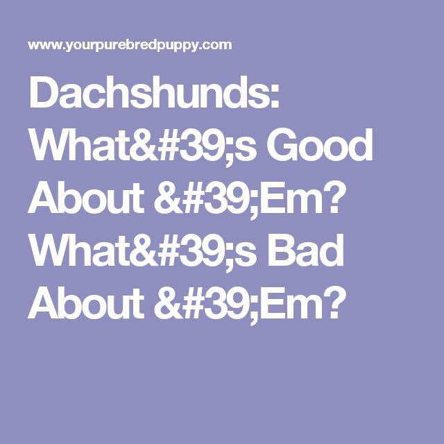 Dachshunds: What's Good About 'Em? What's Bad About 'Em?