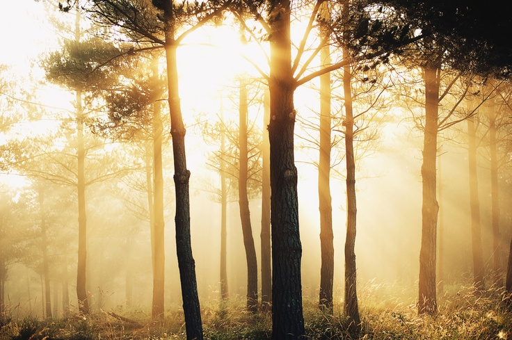Sun bursting its way through the misty forest in northern Spain.  by theebbingtide.tumblr.com