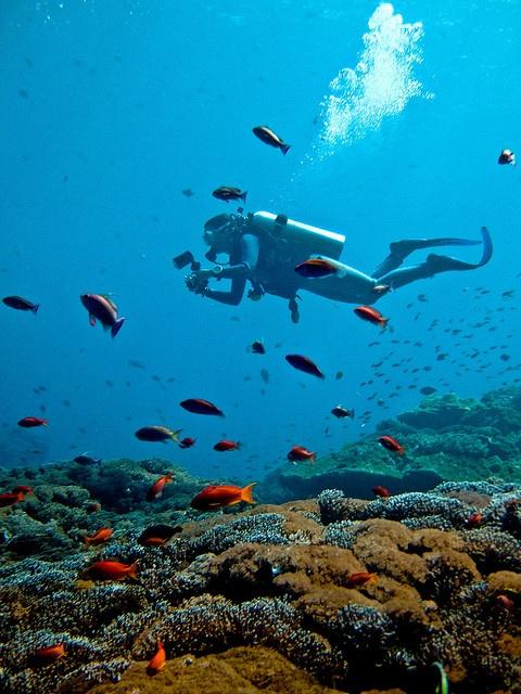 Scuba diving in Bali Nusa Lembongan.