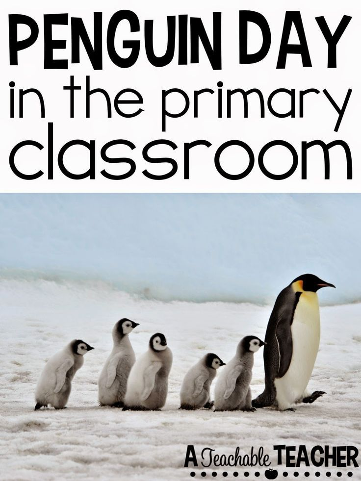 Penguin Day activities in the primary classroom