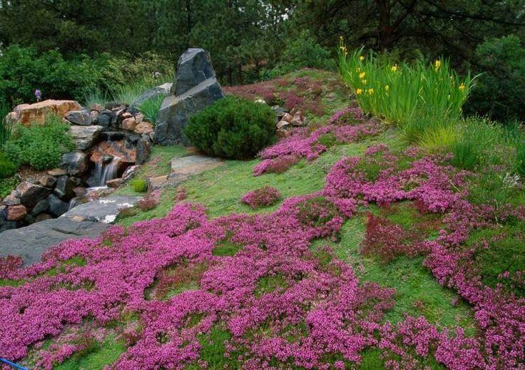 aménager en jardin en pente: phlox rampant et cascade