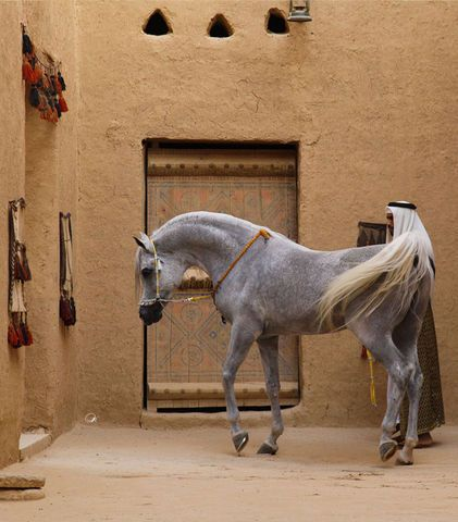 I would LOVE a Miniature horse that looks JUST like this!