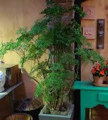 Resultado de imagem para árvore de interior