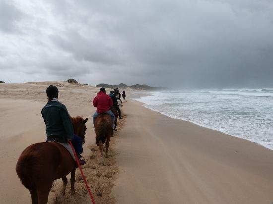 Horse rides on the beach even in rain conditions its amasing