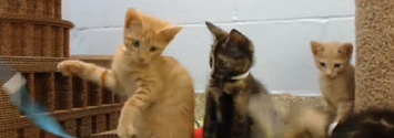 Drop Everything And Watch This Live Kitten Cam!