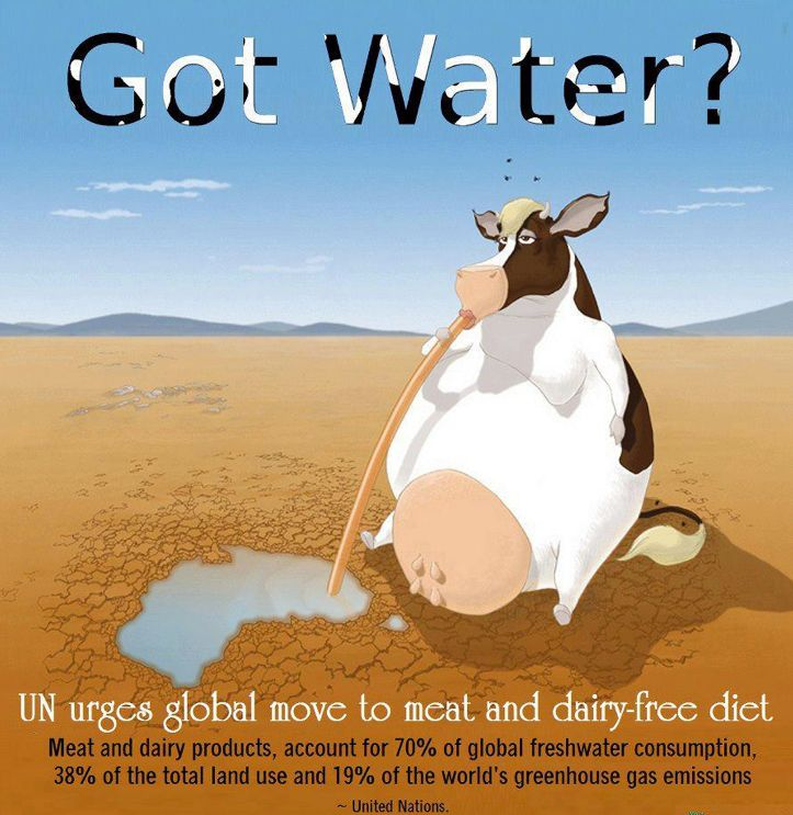 <3 Got Water? <3 United Nations urges global move to meat~free & dairy~free diet! <3