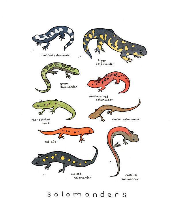 Best 25 Gecko Tattoo Ideas On Pinterest Lizard