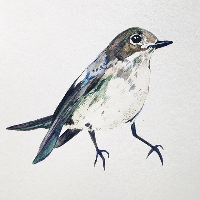 I Am A Bird Now #painting #delicate #irishartist #nature #windsorandnewton #illustratorsofinstagram #louisenaughton #birdillustration #birdsofinstagram