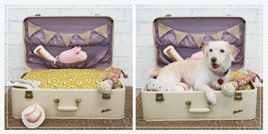 neat small dog house pictures - Google Search