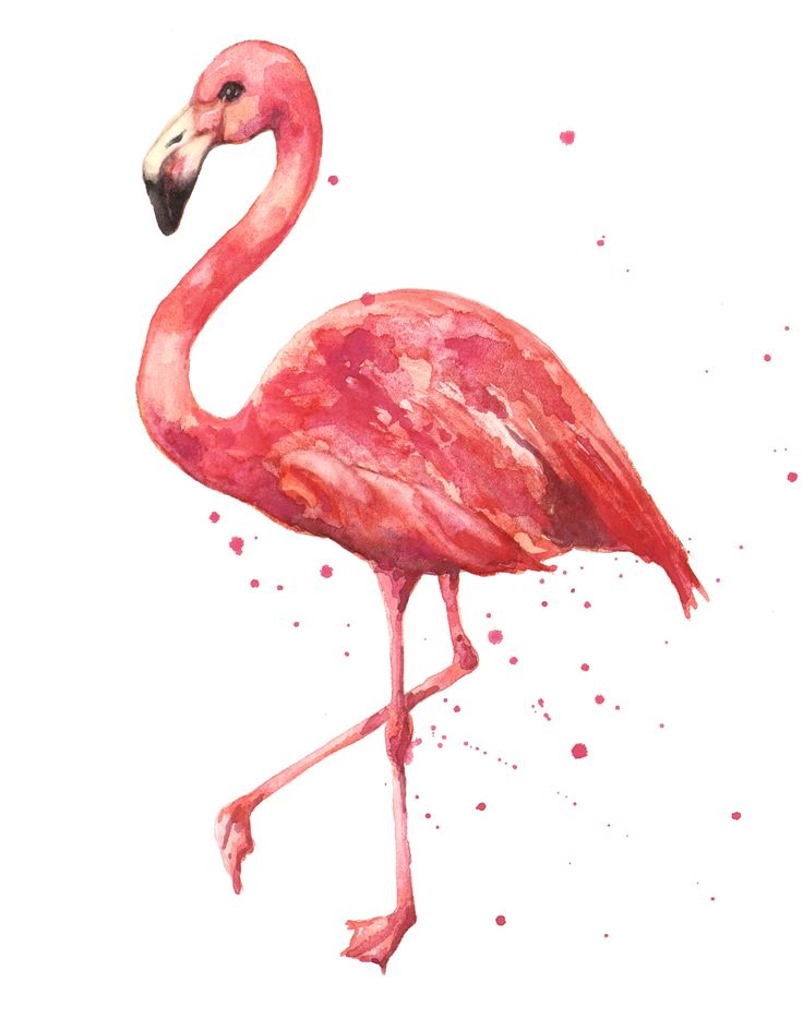 flamingo head drawing - Google Search