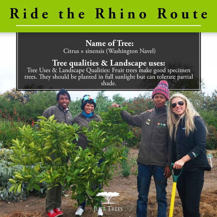 """#Throwback to September 2014 when we donated 10 x 40L fruit trees towards beautifying the """"Ride the Rhino route"""" in the Kwa Ttu area!"""