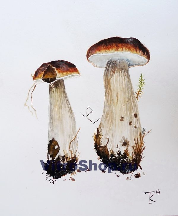 """Картина """"Белые грибы"""", акварель"""