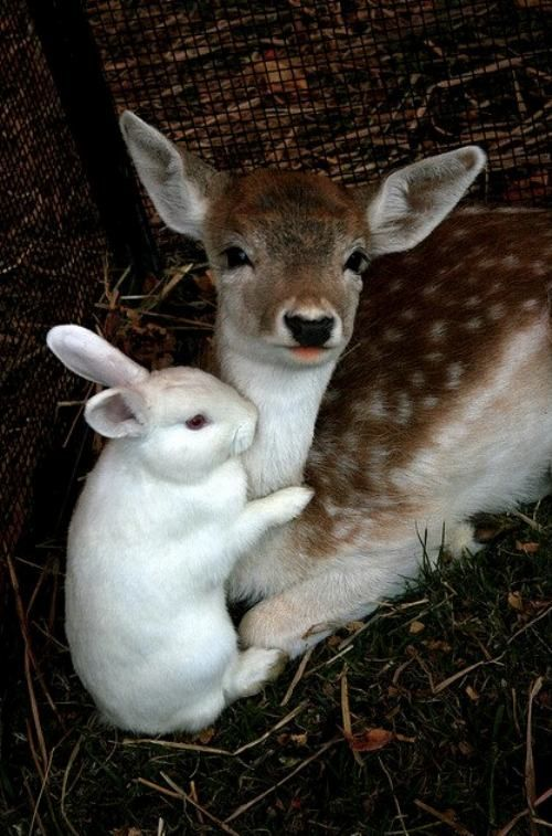 The real Life Bambi and Thumper!