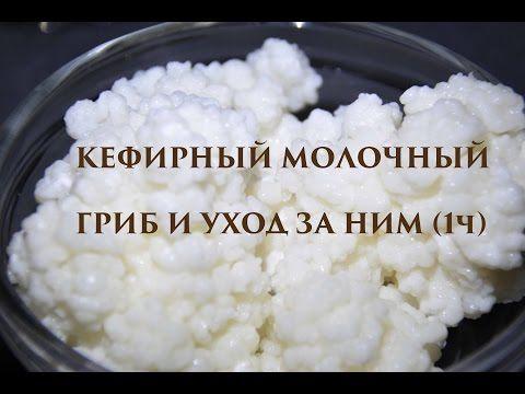 КЕФИРНЫЙ МОЛОЧНЫЙ ГРИБ И УХОД ЗА НИМ (1ч) - YouTube