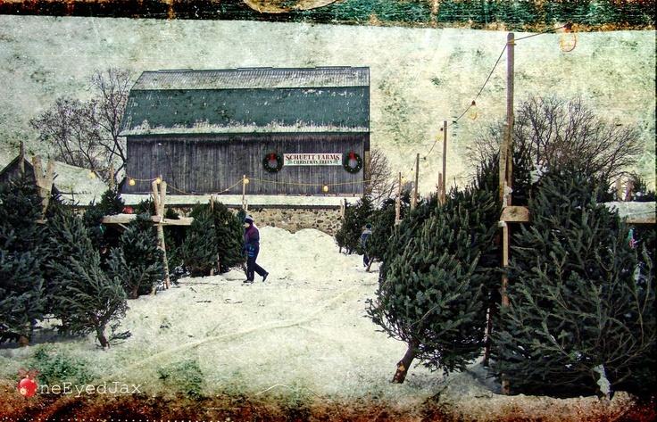 Yawn Station Christmas Tree Farm