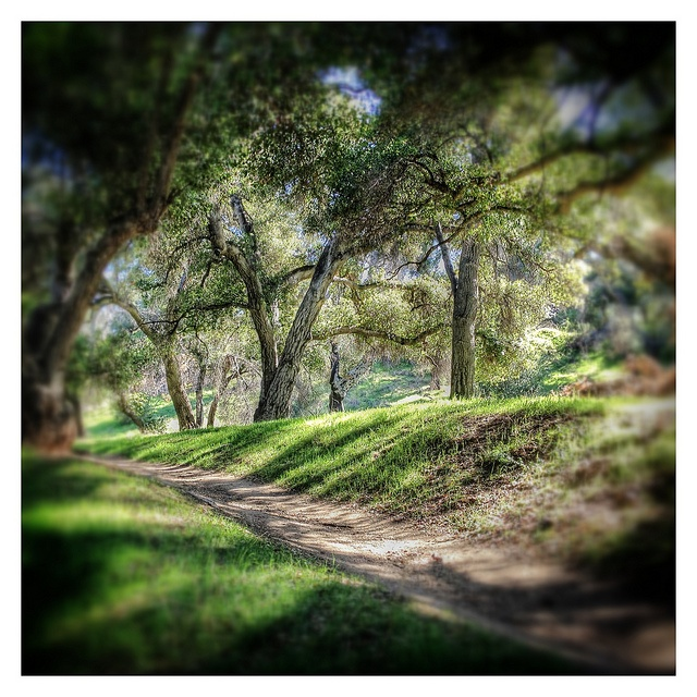 Placerita Canyon is a gorgeous #hike anytime of the day #outdoor