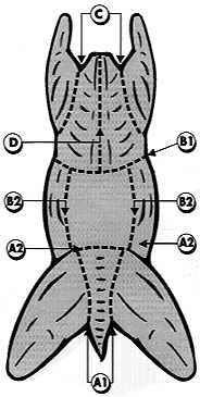 Cuts of Rabbit Meat | The following cutting diagram and description yields portions for ...