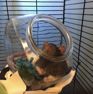 Fish Bowl Rat Bed - petdiys.com                                                                                                                                                                                 More