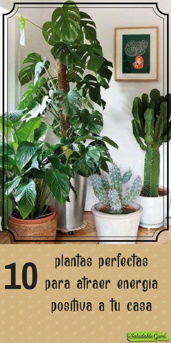 10 Plantas Perfectas Para Atraer Energaa Positiva A Tu Casa